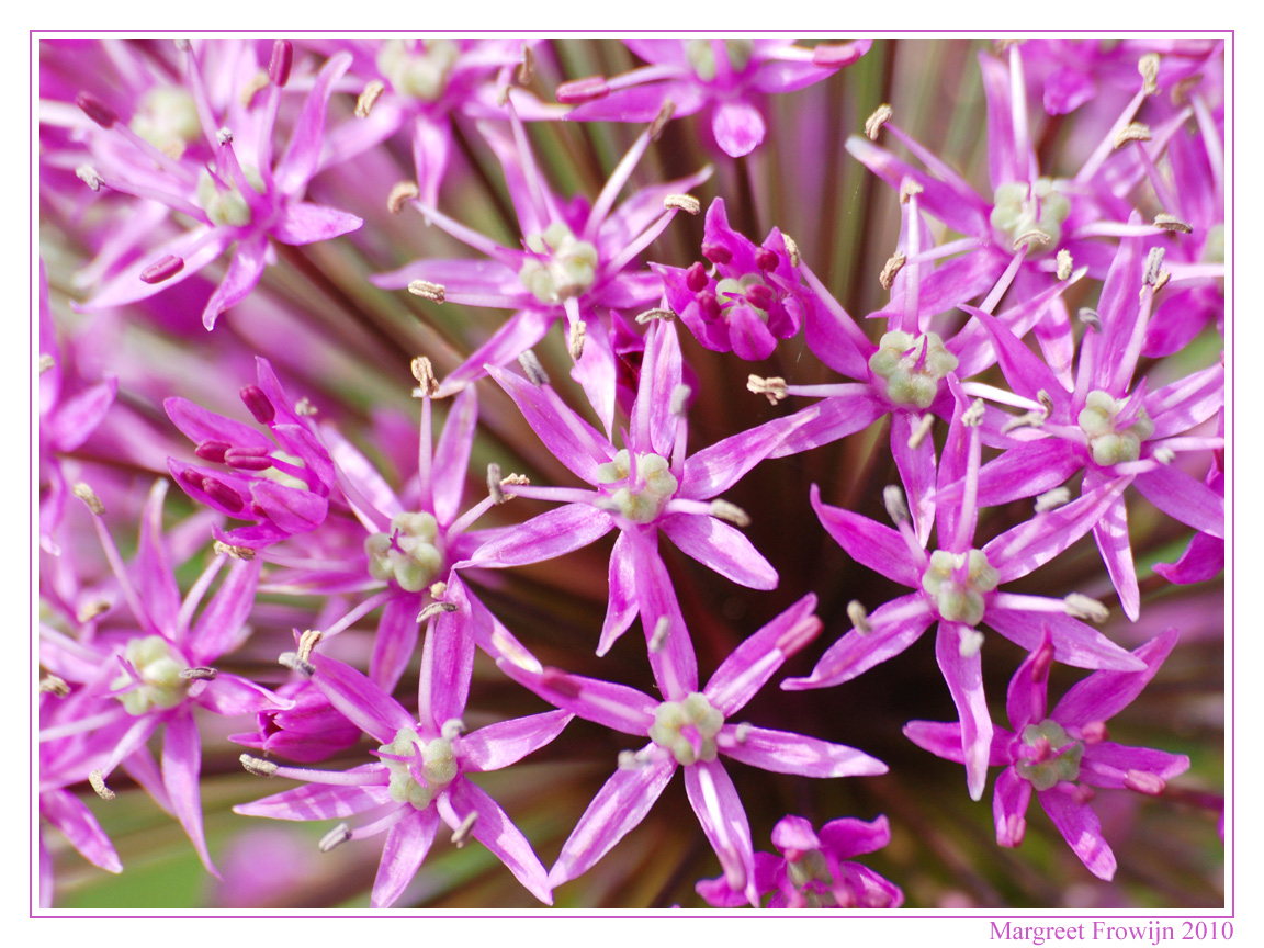 bloemen, bloemenwallpaper, bloemenwallpapers, bloemenachtergrond, bloemenachtergronden