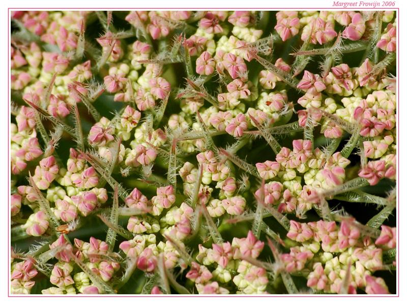 bloem, bloemen, bloemenwallpaper, bloemenwallpaper, bloemenwallpapers