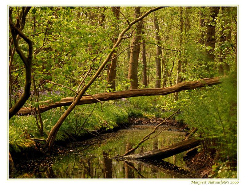 bos, boom, bomen, free wallpaper, wallpapers, gratis achtergrond, achtergronden