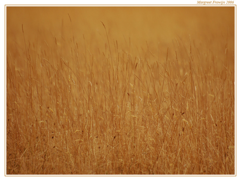 gras, grassen, bruine, wallpaper, wallpapers, achtergrond