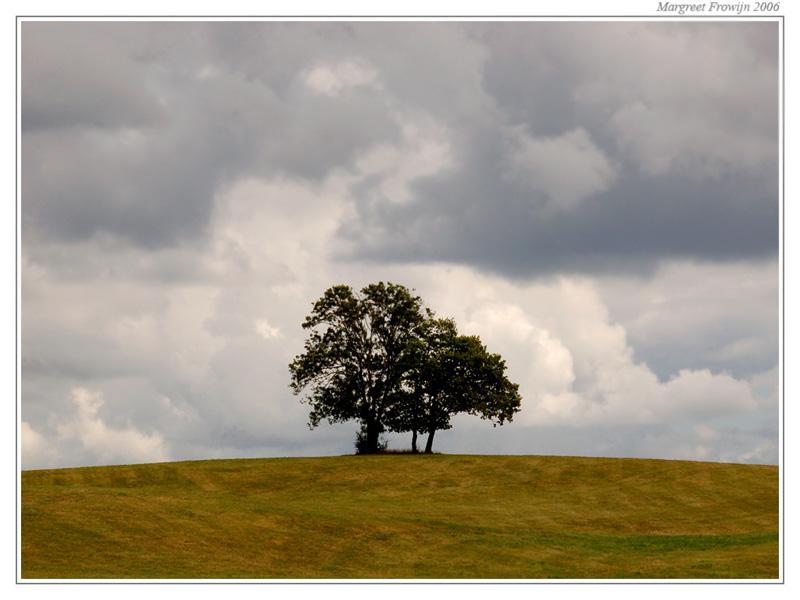 boom alleen op een heuvel, free wallpaper, wallpapers