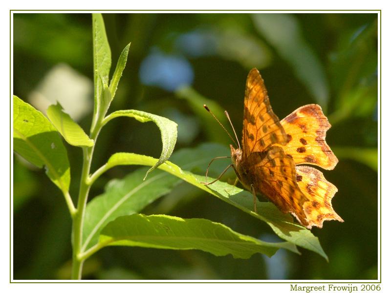 vlinder, vlinders, vlinderwallpaper, vlinderachtergrond