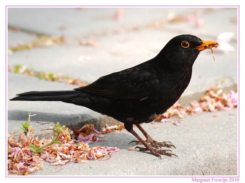 vogel, vogels, vogelwallpaper, vogelwallpapers, vogelwallpapers
