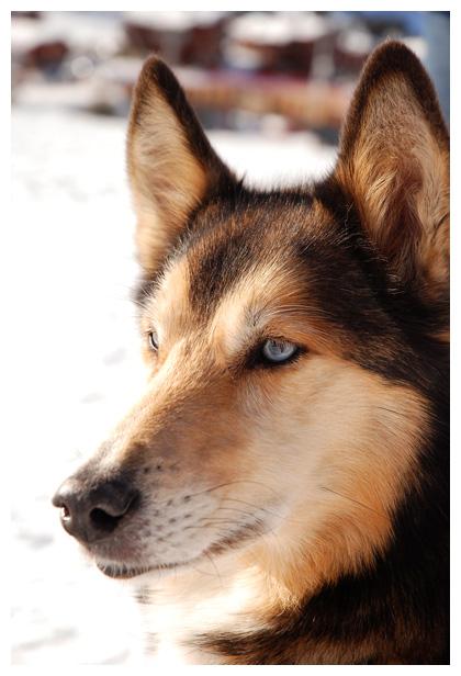 Beroemd Diverse rassen honden, hond, hondje, hondjes, hondfoto´s &YV17
